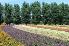 Jardin d'agrément coloré, ferme de Tomita, 25-07-17 Sapporo Photographie stock libre de droits