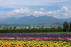 Jardin d'agrément coloré, ferme de Tomita, 25-07-17 Sapporo Photos stock