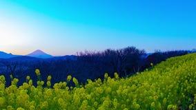 Jardin d'agrément de Canola de laps de temps de coucher du soleil au parc d'Azumayama dans le tir large de Shounan Kanagawa banque de vidéos