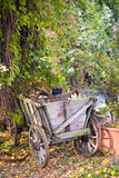 Jardin d'agrément sauvage Photo stock