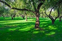 Jardin d'Apple Images libres de droits