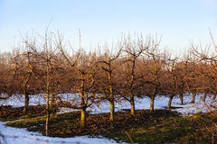 jardin d'Apple-arbre photo stock
