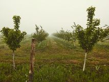 Jardin d'Apple en brouillard photo libre de droits