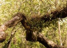 Jardin d'arbre de fougère Image libre de droits