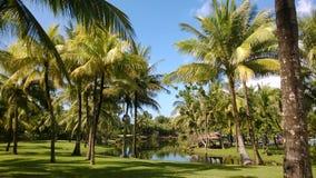 Jardin d'arbres de Plam avec une piscine Photographie stock