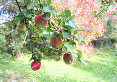 Jardin d'automne Photographie stock libre de droits
