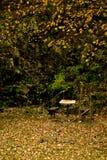 Jardin d'automne Photos stock