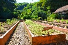 Jardin d'or de triangle de camp couvert de Four Seasons photographie stock