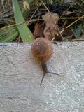 Jardin d'escargots Photographie stock libre de droits