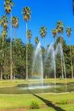 Jardin d`essais, Algiers stock image