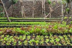 Jardin d'herbes Photo libre de droits