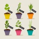 Jardin d'herbes aromatiques avec des pots de l'ensemble 2 d'herbes Photos stock