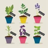 Jardin d'herbes aromatiques avec des pots de l'ensemble 4 d'herbes Photographie stock