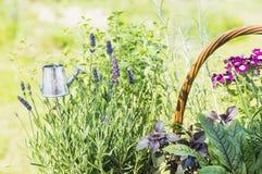 Jardin d'herbes aromatiques avec la boîte d'arrosage Image stock
