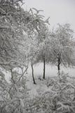 Jardin d'hiver Photographie stock