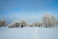 Jardin d'hiver Image libre de droits