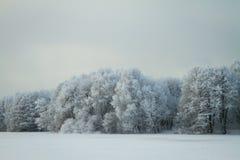Jardin d'hiver Photo libre de droits
