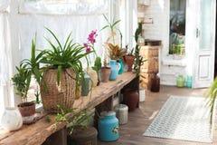 Jardin d'hiver avec un bon nombre d'usines L'espace dans la maison pour la relaxation avec des fleurs Jardinage, véranda dans rus photos stock