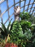 Jardin d'intérieur Photo libre de droits
