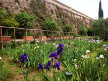 Jardin d'iris chez Piazzale Michaël Angelo à Florence Photos stock