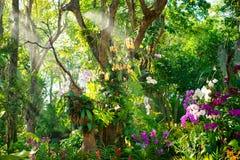 Jardin d'orchidée images libres de droits
