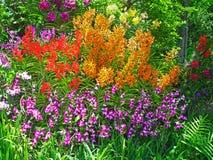 Jardin d'orchidée Image stock