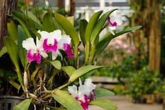 Jardin d'orchidée dans les tropiques Photographie stock