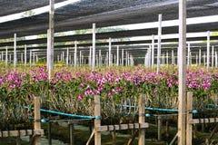 Jardin d'orchidée dans les tropiques Images stock