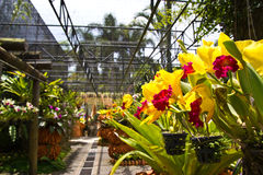 Jardin d'orchidées Image libre de droits