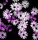 Jardin Daisy Flowers Image libre de droits