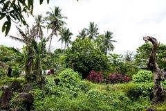Jardin dans la forêt tropicale sur le cuisinier Islands Image libre de droits
