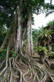 Jardin de balata, la Martinique Photos stock