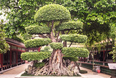 Jardin de Baomo en Chine Photos libres de droits