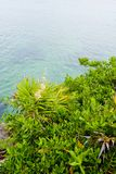 Jardin de bord de la mer Photos libres de droits