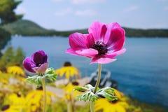 Jardin de bord de lac Photographie stock