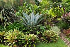 Jardin de Bromeliad Image stock