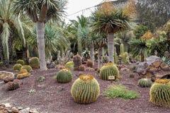 Jardin de Cactoo Images libres de droits