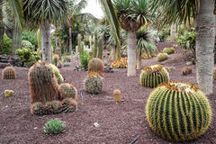 Jardin de Cactoo Photographie stock libre de droits