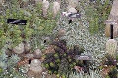 Jardin de Cactoo Photo libre de droits