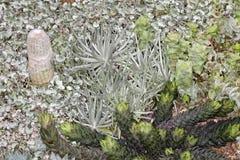 Jardin de Cactoo Photos stock