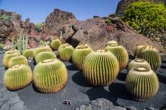 Jardin De Cactus兰萨罗特岛 免版税库存图片
