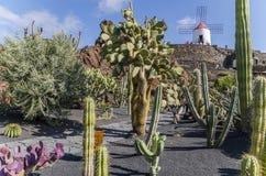 Jardin De Cactus兰萨罗特岛 图库摄影