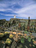 Jardin de cactus à Lanzarote Photo stock