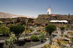 jardin de cactus Images libres de droits