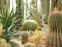 Jardin de cactus Photos libres de droits