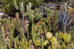 Jardin de cactus Photographie stock libre de droits