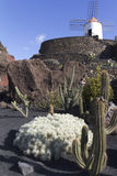 Jardin de cactus Royalty Free Stock Image