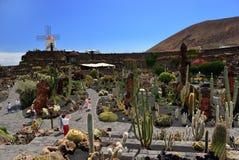 Jardin de Cactus Photo libre de droits