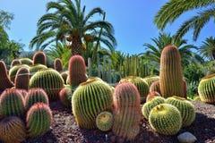 Jardin de cactus Photographie stock