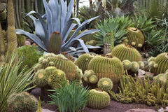 Jardin de cactus - Elche - Espagne Photos libres de droits